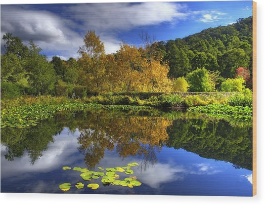 Reflections Wood Print by Damian M Photographer