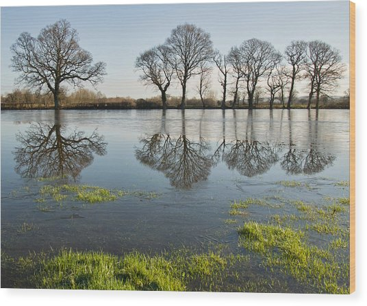 Reflections In Flood Water Wood Print