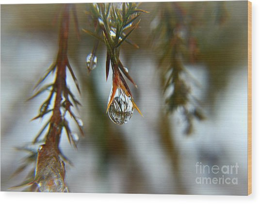 Reflections Of Beauty Wood Print
