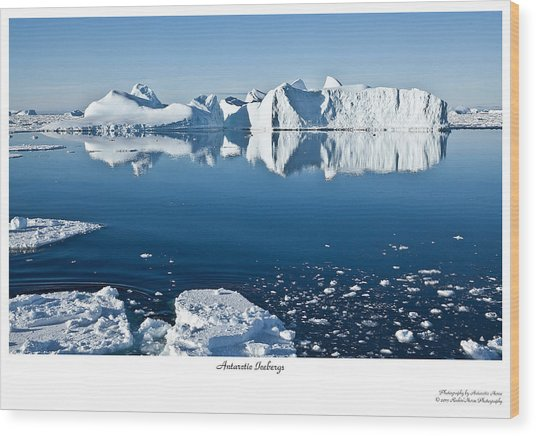 Reflective Icebergs Wood Print by David Barringhaus