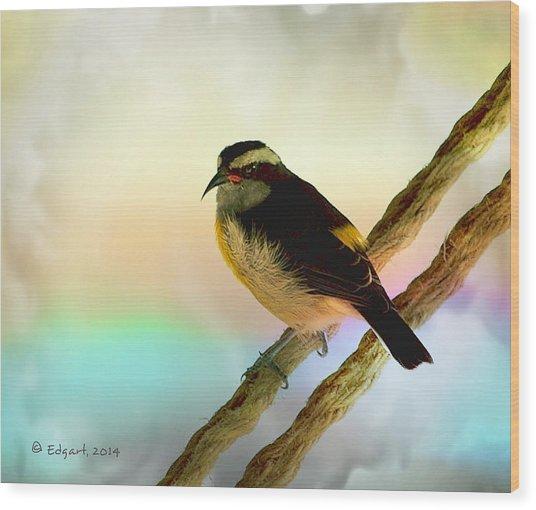 Reinita Wood Print