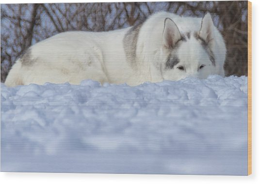 Relaxing In The Snow Wood Print