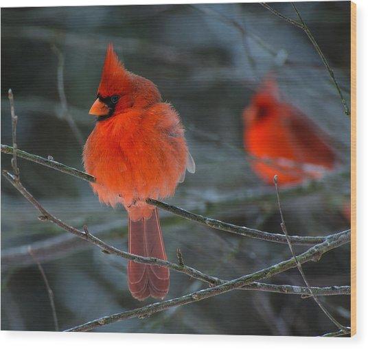 Resident Reds Wood Print