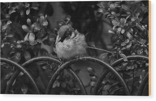 Rest For The Weary Wood Print by Paul Watkins