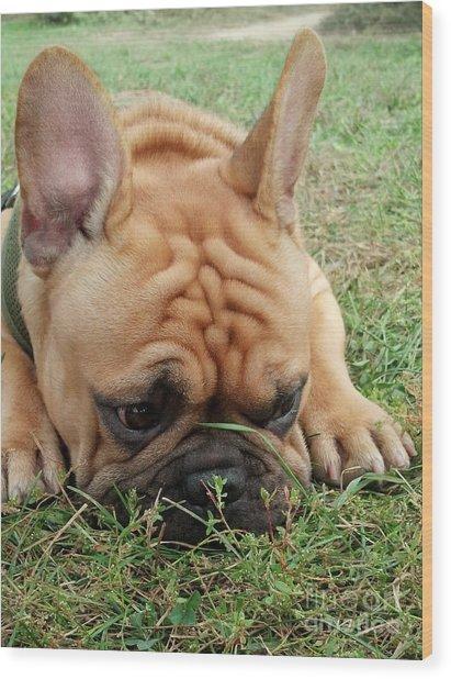 Rest- French Bulldog Wood Print