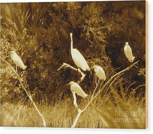 Resting Flock Sepia Wood Print
