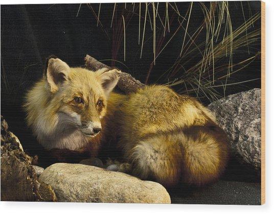 Resting Fox Wood Print