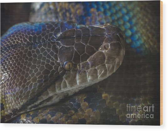 Reticulated Python With Rainbow Scales Wood Print