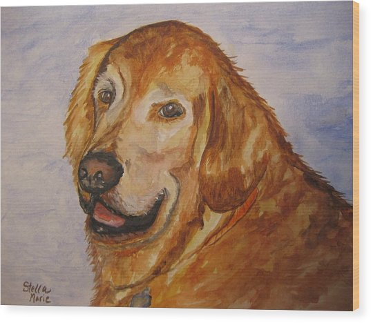 Retriever In His Golden Years Wood Print