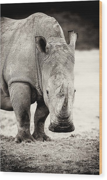 Rhino After The Rain Wood Print