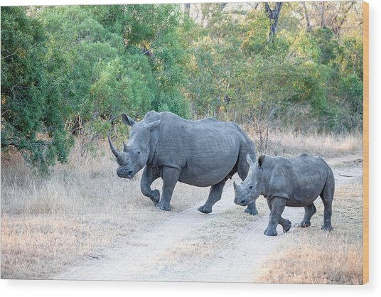 Rhino And Mom Wood Print by Craig Brown