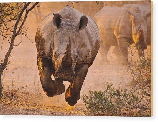 Rhino Learning To Fly Wood Print