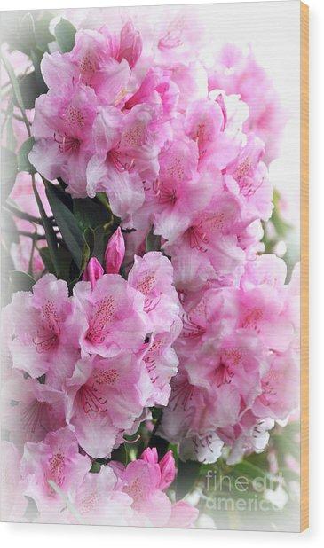 Rhodie Blossom Cascade Wood Print