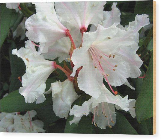 Rhododendron 1 Wood Print