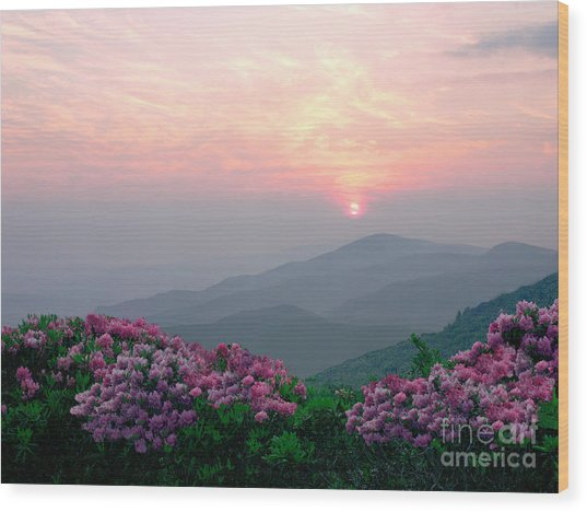 Rhododendron Sunrise Wood Print