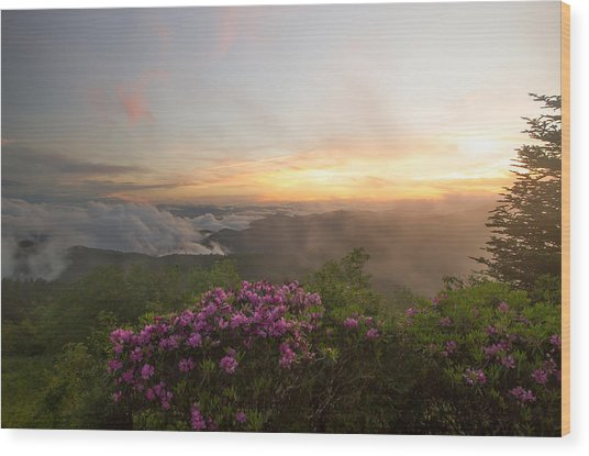 Rhododendron Sunset Wood Print