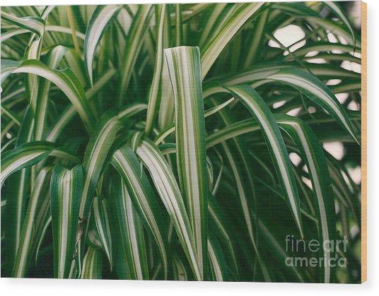 Ribbon Grass Wood Print