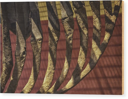 Ribcage On Red And Gold Wood Print