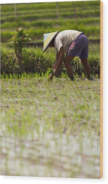 Rice Farmer - Bali Wood Print