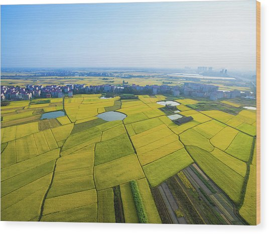 Rice Field Wood Print by Yangna