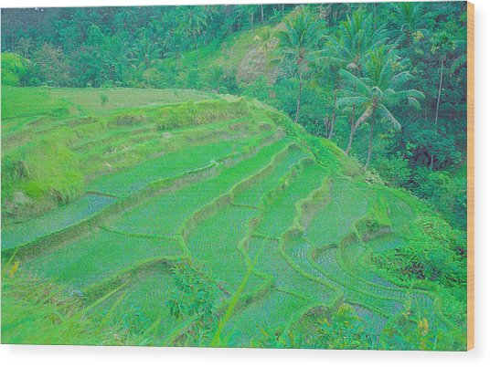 Rice Fields In Indonesia Wood Print