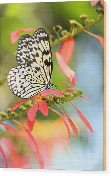 Rice Paper Butterfly In The Garden Wood Print
