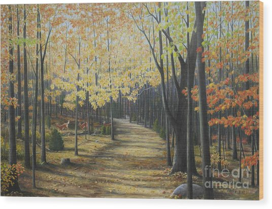 Rideau Walking Trail Wood Print