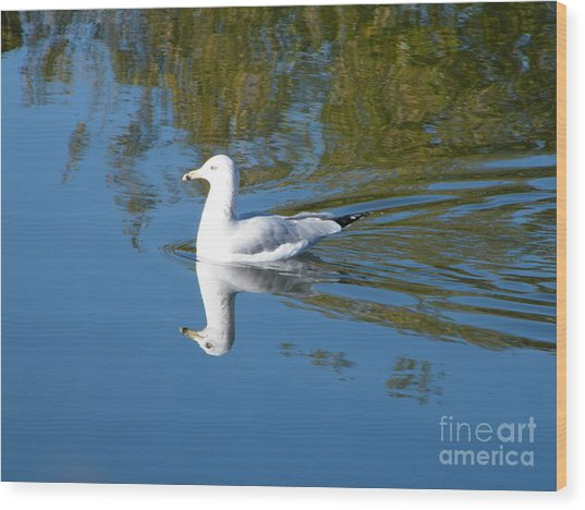 Wood Print featuring the photograph Ring-billed Gull by Ann E Robson