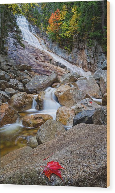 Ripley Falls And Red Maple Leaf Wood Print