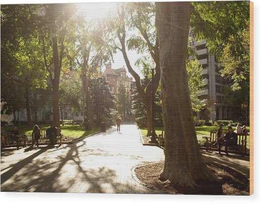 Rittenhouse In The Sun Wood Print