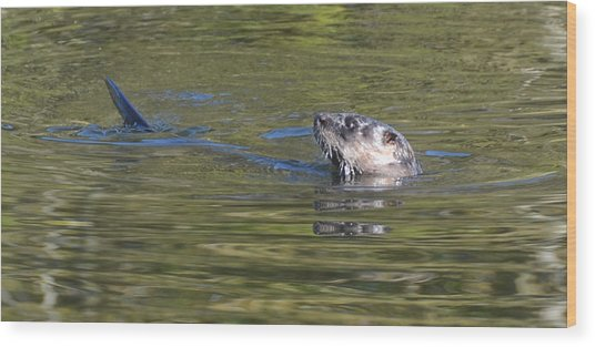 River Otter Wood Print by Julie Cameron