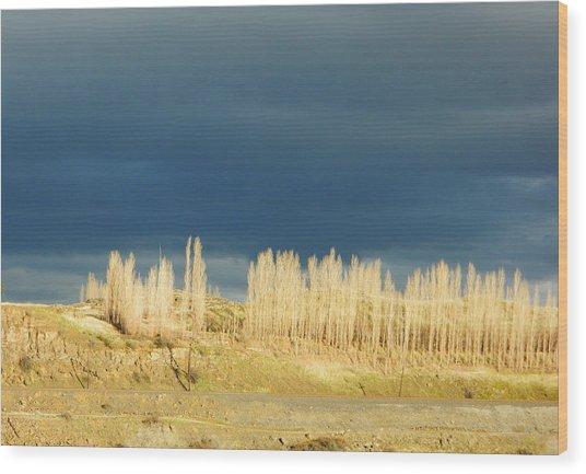 River Poplars Wood Print