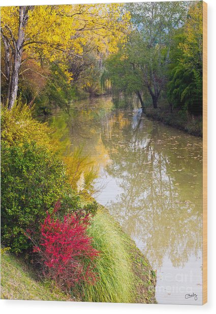 River With Autumn Colors Wood Print
