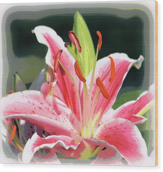 Rk Pink Tiger Lily 2 Wood Print by Sheri McLeroy