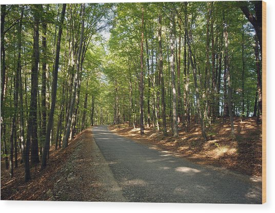 Road In Forest  Wood Print by Ioan Panaite