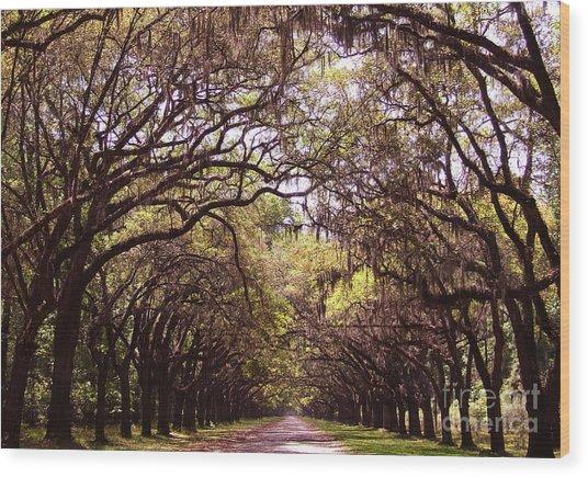 Road Of Trees Wood Print