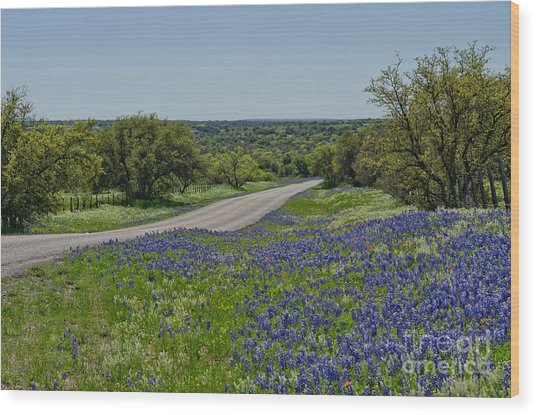 Road To Castell Wood Print by Cathy Alba