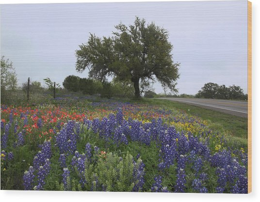 Roadside Splendor Wood Print