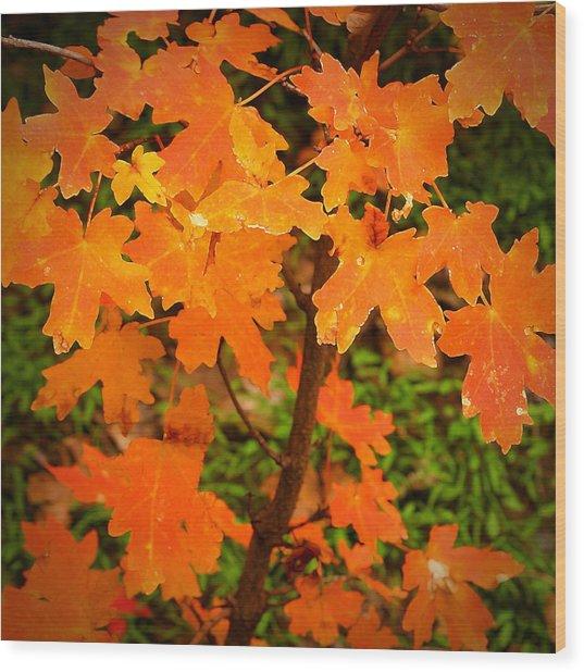 Robert Melvin - Fine Art Photography - Autumn Orange Wood Print