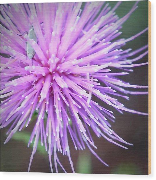 Robert Melvin - Fine Art Photography - Bug And Thistle Wood Print