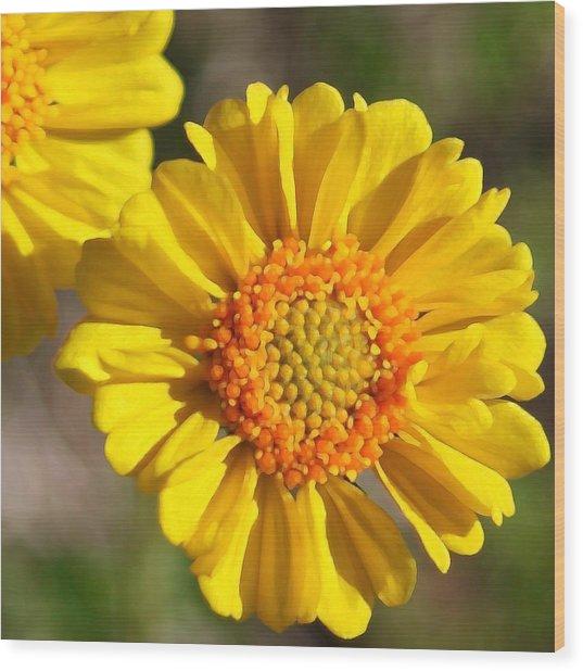Robert Melvin - Fine Art Photography - Call Me Sunshine Wood Print