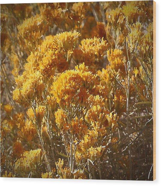 Robert Melvin - Fine Art Photography - Golden Yarrow Wood Print