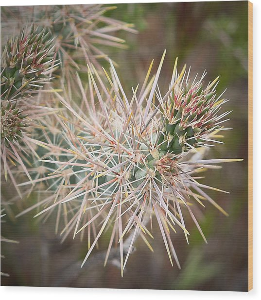 Robert Melvin - Fine Art Photography - Thorny Issue Wood Print