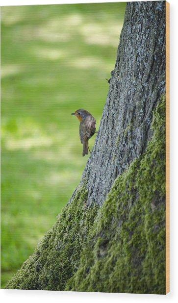 Robin At Rest Wood Print