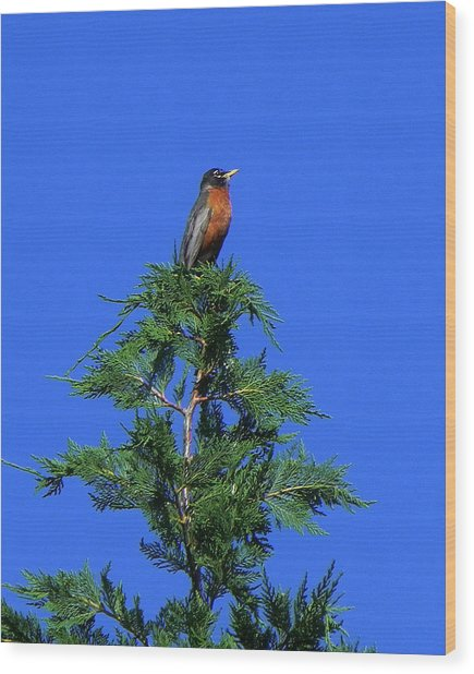 Robin Christmas Tree Topper Wood Print