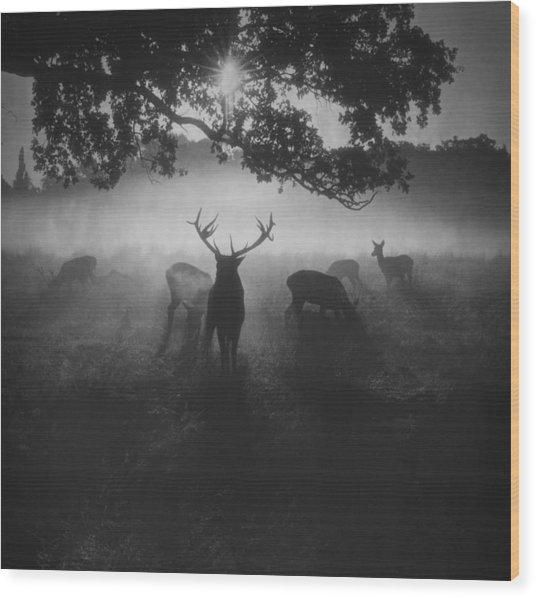 Robin Hood Woods Wood Print by Robert Fabrowski