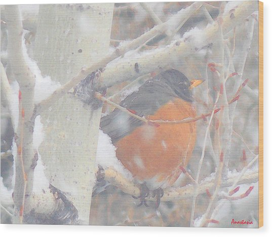 Robin In April Snow Wood Print
