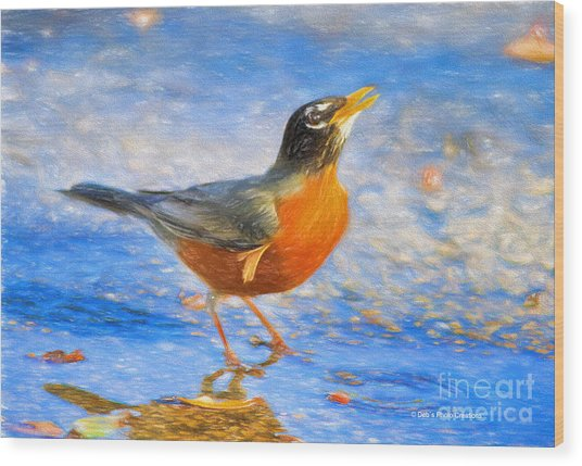 Robin In Florida Wood Print