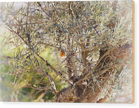 Robin Perched On Olive Tree Wood Print