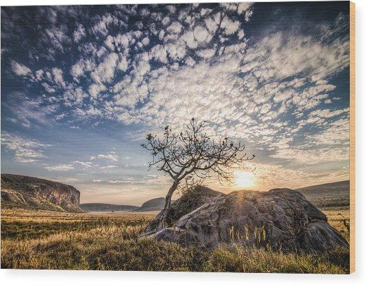 Rock Tree And Rising Sun Wood Print